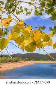 vertical orientation color image with brightly colored leaves in the foreground, and Carter Lake in Loveland, Colorado in the background / Carter Lake in Fall