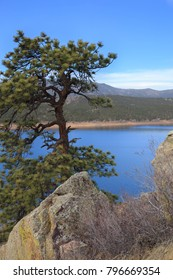 Vertical orientation color image of Carter Lake, Colorado, with a single tree in the foreground