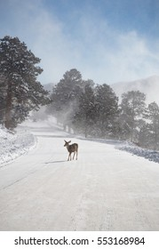 vertical orientation color image of a deer crossing a snow covered road in blowing snow, and a car approaching in the background / Avoiding Deer on the Road in Winter
