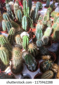 Vertical pattern of cactuses
