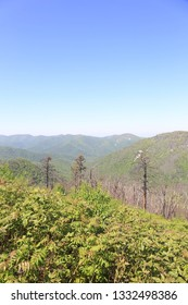 Vertical photo of the Blue Ridge Mountains taken in May