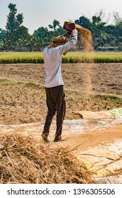 Vertical Photo of Indian Farmer working in crop field, is Hand Winnwoing the Chaff from Wheat Grains on hot sunny day of Summer. Hand Winnowing is traditional technique still used in rural agriculture