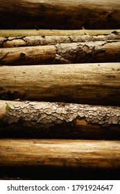 Vertical photo of a pile of wood after a bark beetle calamity, beautiful texture, Czech Republic