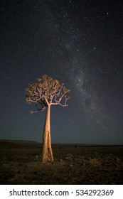 A vertical photograph of a Quiver Tree (aloe dichotoma) lit up at night and the Milky Way at The Fish River Canyon