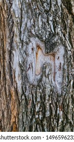 vertical photograph of a tree bark with a letter m scar