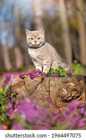 Vertical picture of a kitten sitting on the stump in the forest