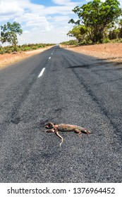 Vertical portrait image of dead goanna road kill on a straight lonely ashphalt highway in Outback Australia.