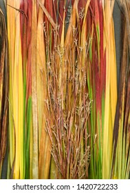 Vertical scanography image of collage of ornamental grasses in fall color