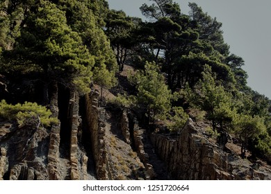 Vertical sheer cliffs with layers of sedimentary rocks of the ancient sea and pine against the blue sky. Cliffs of Upper Cretaceous limestones and marls are exposed on the rocks.