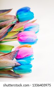 Vertical shoot of multi colored tulips on light background with copy-space