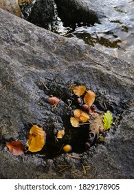 A vertical shot of autumn leaves on a rock on a lake in Larvik,