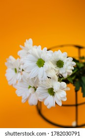 Vertical shot of a bouquet of fresh daisies on an orange background with negative space. it is used in alternative medicine to treat respiration, digestive problems and as pain killer.