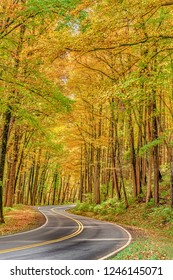 Vertical shot of a curvy road going through the golden Autumn foilage in the Great Smoky Mountains National Park.