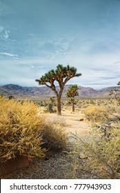 Vertical Shot of Joshua Trees in California Desert