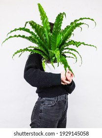 A vertical shot of a person holding a potted bird's-nest fern against a white wall