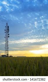 Vertical shot Radio Station Antenna over Paddy Rice field during Sunrise at Malaysia, Sekinchan