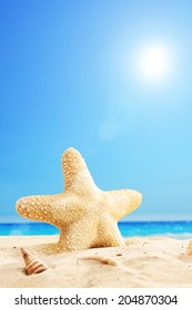 Vertical shot of a starfish on a sunny beach