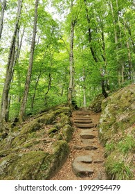 A vertical shot of a stone pathway in a forest in Larvik, Norway
