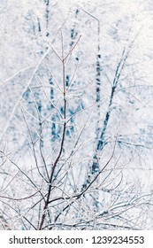 Vertical shot of tree branches covered with ice and white snow in winter