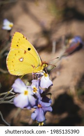 A vertical shot of a wondrous yellow butterfly picking at gentle violet flowers in a sunny forest