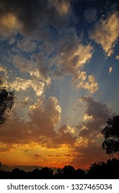 vertical sunset image between trees with clouds and sunrays