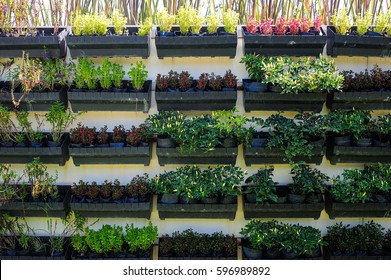 Vertical vegetable garden, greenery plant wall background