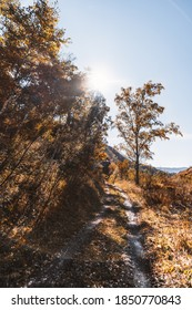Vertical view of a beautiful earth road in autumn mountains backlit by warm sun, with yellowed birches and fallen leaves on the ground, clear blue fall sky with a sun flare casting a chroma hoop