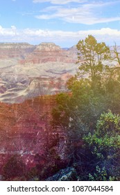Vertical view of Grand Canyon South Rim with retro vintage filter  framed on one side by trees