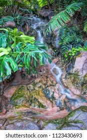 Vertical view of jungle stream