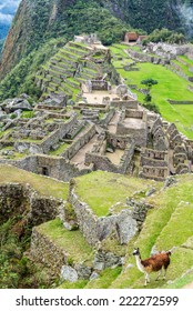 Vertical view of a llama with the Incan ruins of Machu Picchu in the background
