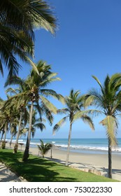 Vertical view of Mancora Beach in Peru with oalm trees and blue skies