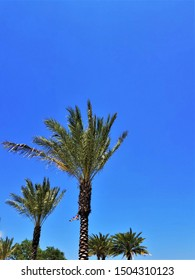 Vertical View of Palm Trees Against a Bright Blue Cloudless Sky