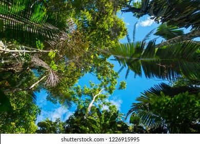 Vertical view of the rainforest in the Cuyabeno Natural Reserve, Amazon Rainforest, Ecuador
