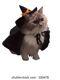 Vertical witch cat.