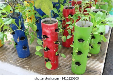 verticulture farm, plant vegetables vertically in used pipes and buckets