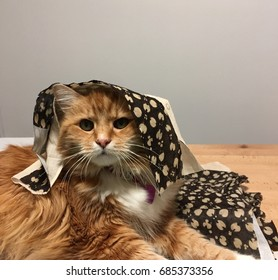 Very alert range cat with a brown dotted cloth on its head.