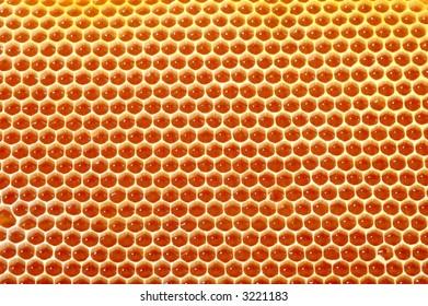 very beatifull honey cells background