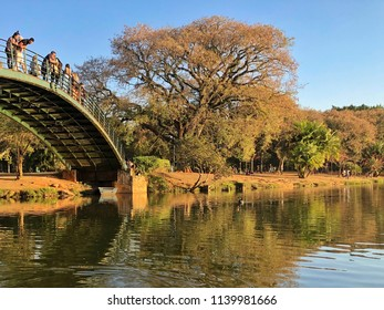 Very beautiful afternoon at Ibirapuera Park, Sao Paulo, Brazil. Romantic landscape by the lake. Gorgeous nature. Relaxing and peaceful moment. Colorful autumn