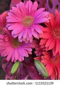 A very Beautiful Assortment of Pink Gerber Daisies