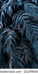 very beautiful background of ornamental plants