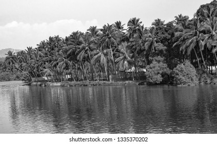 Very Beautiful Black & White Photo of a Tropical natural stream of freshwater lake/river/lagoon/backwaters with a number of Palm Trees dropping its reflection in the water stream, along the coastline.