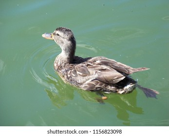 Very beautiful duck photographs.