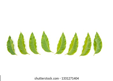 leaf cure disease Images, Stock Photos & Vectors   Shutterstock