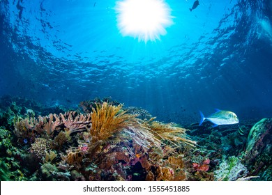 very beautiful soft coral in underwater