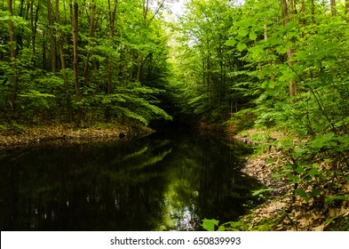 Very beautiful summer landscape. Mountain Lake. A small lost lake in a mountain forest. Green branches are reflected in the water.