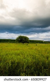 Very beautiful summer landscape. Tree in a field with dark clouds in the sky. Dramatic landscape. Summer before the rain