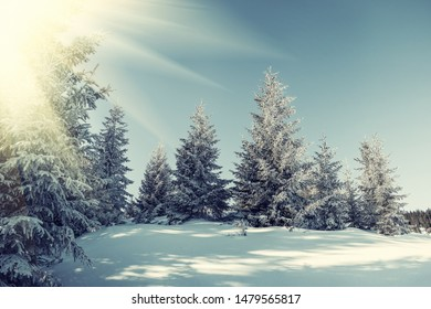 Very beautiful winter landscape with snowy forest and sun. Vintage stylization, retro film filter
