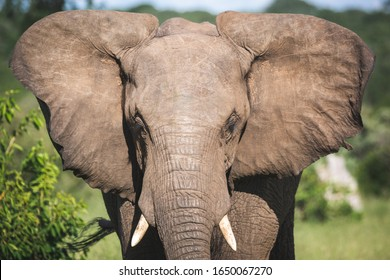 Very close up portrait of an elephant