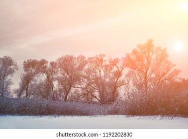 Very cold winter day, winter trees background and sunlight