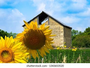 Very cool old stone barn in Central Illinois with gorgeous yellow sunflowers in the foreground.